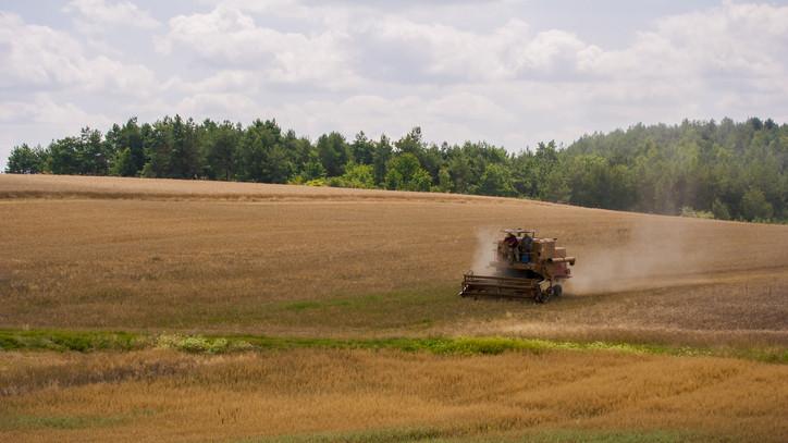 Elhasaltak a gabonák: nehéz aratás vár a gazdákra