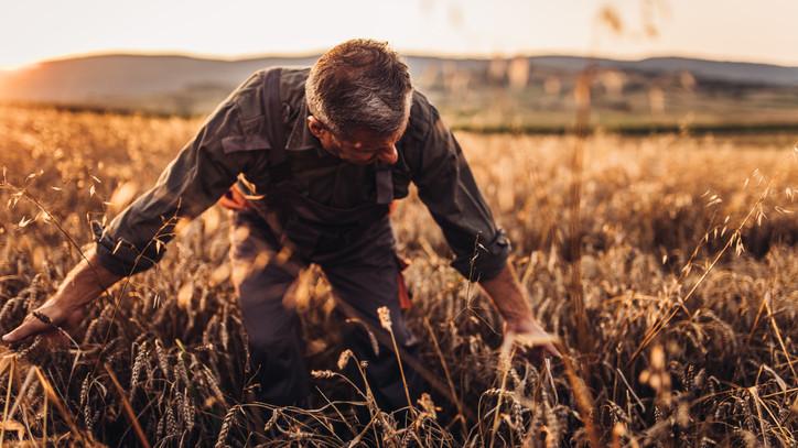 Fogják a fejüket a gazdák: borzasztó gyenge lesz az idei termés