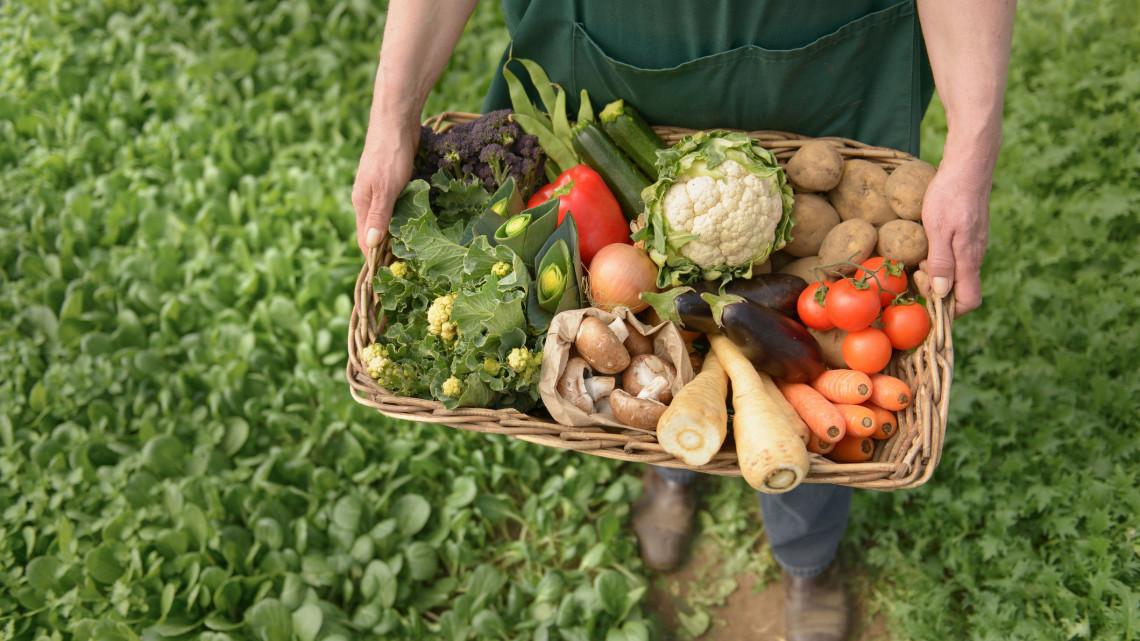 Íme a Bács-Kiskun megyei farm, aminek termékeiért megvesznek a fővárosi ínyencek