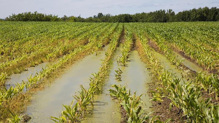 Víz alá kerültek a szabolcsi földek: kipusztulhat a termés a rengeteg eső miatt