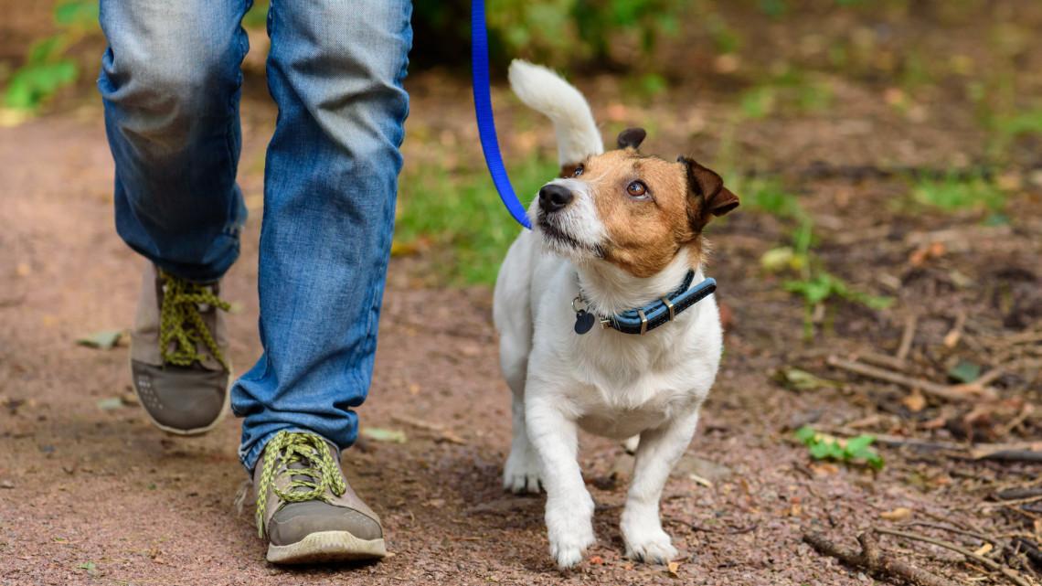 Súlyos veszély leselkedik a kutyatartókra: így előzhető meg egyszerűen a baj