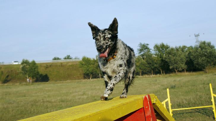 Érdekes dolgok derültek ki az ősi magyar kutyafajta bundájáról