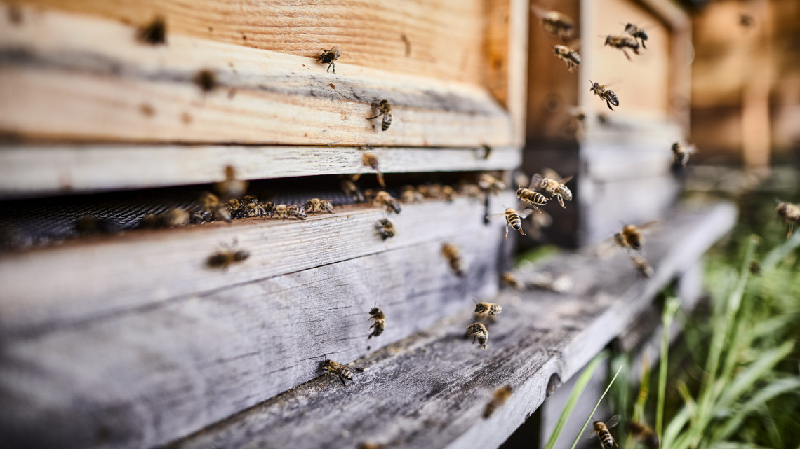 Durva zárlatot rendeltek el a megyeszékhelyen: súlyos méhbetegség jelent meg a városban