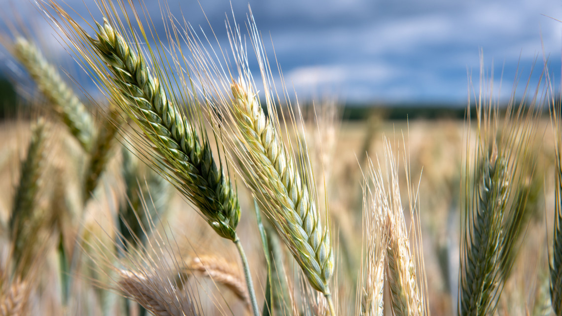 Drámai időjárás nehezítette a gazdák munkáját: erre számítanak a földeken
