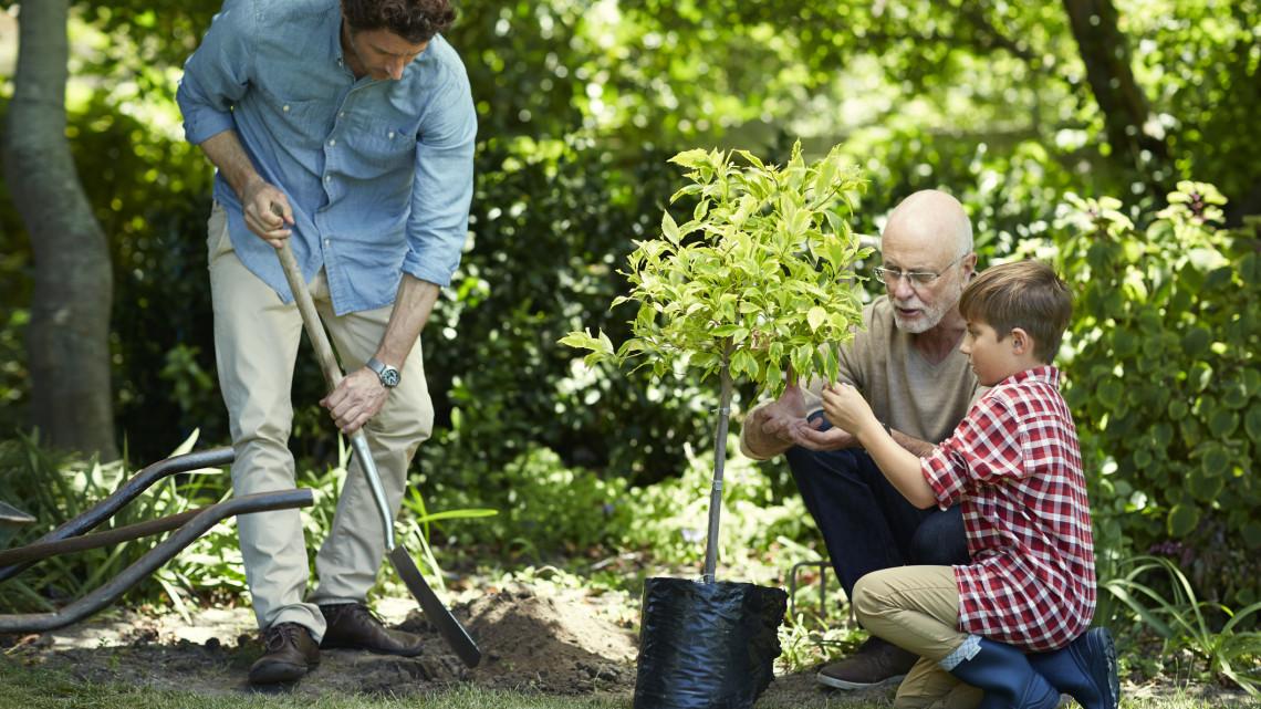 Közel 500 település kap ingyen fákat: mutatjuk a részleteket
