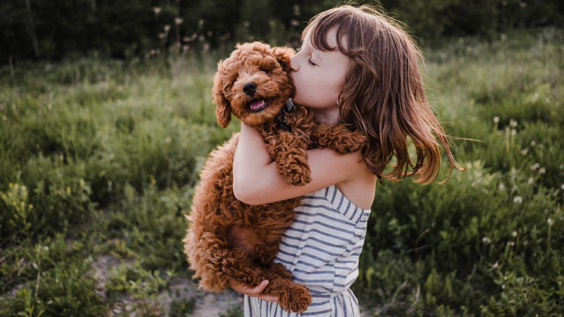 Ettől rettegnek a kisgyerekes gazdik: veszélyes lehet a kutyatartás?