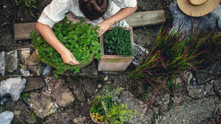 Ellepik a kertet a szúnyogok? 5+1 növény, ami elriasztja a kellemetlen vérszívókat