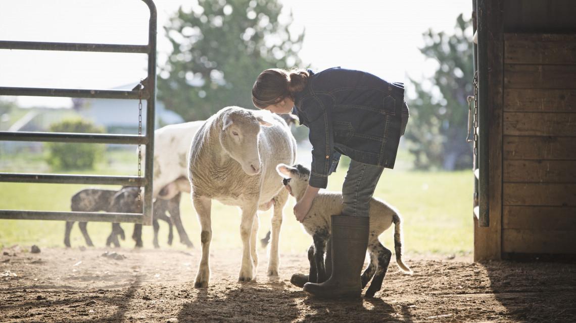 Takarékbank: újra megnyílnak a források az állattenyésztési és a kertészeti ágazatban