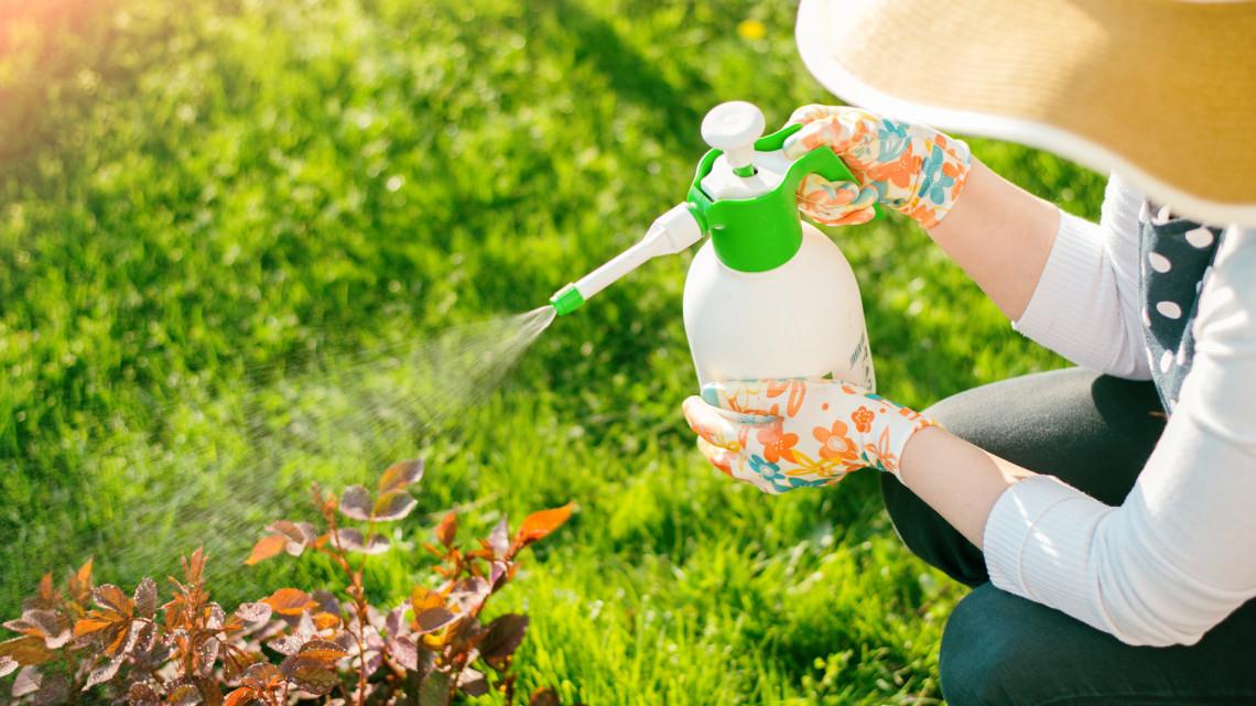 Rengeteget spórolhatsz: 5 természetes, házi növényvédő szer, ami végleg elűzi a kártevőket