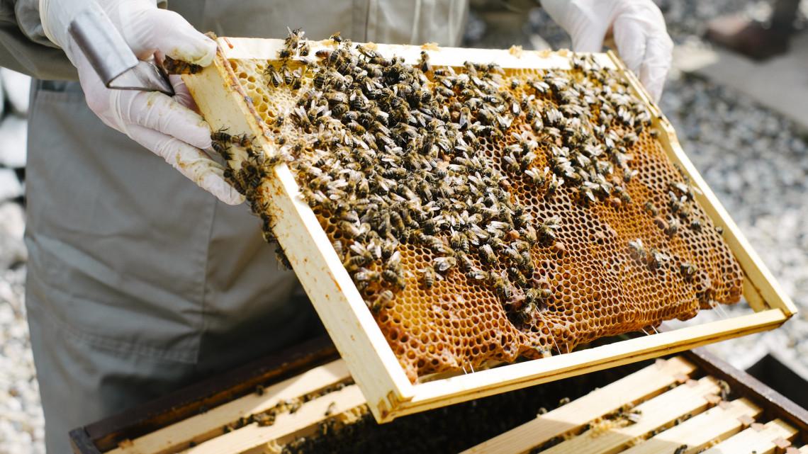 Súlyos a helyzet: ezért ugrott meg durván a méz ára