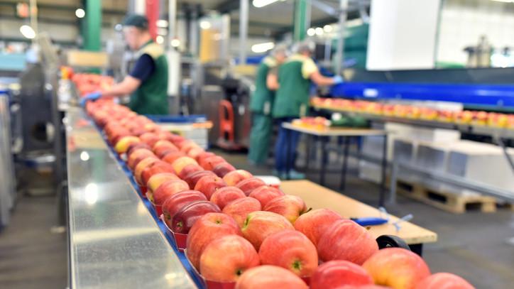 Gigaberuházás Hatvanban: milliárdokból épült az új gyümölcsfeldolgozó üzem