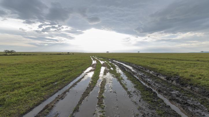 Keresztbe tett a nem várt esőzés a gazdáknak: rengeteg helyen leállították az aratást