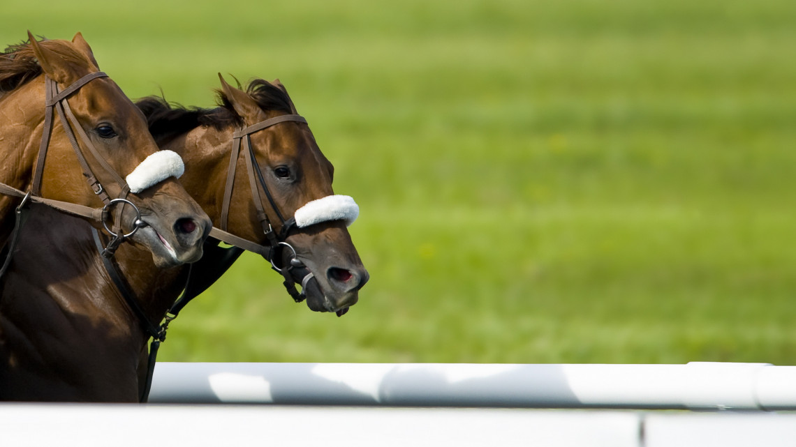 Ezt kár lenne kihagyni: fiatal tehetségek is indulnak a nívós fogathajtó versenyen