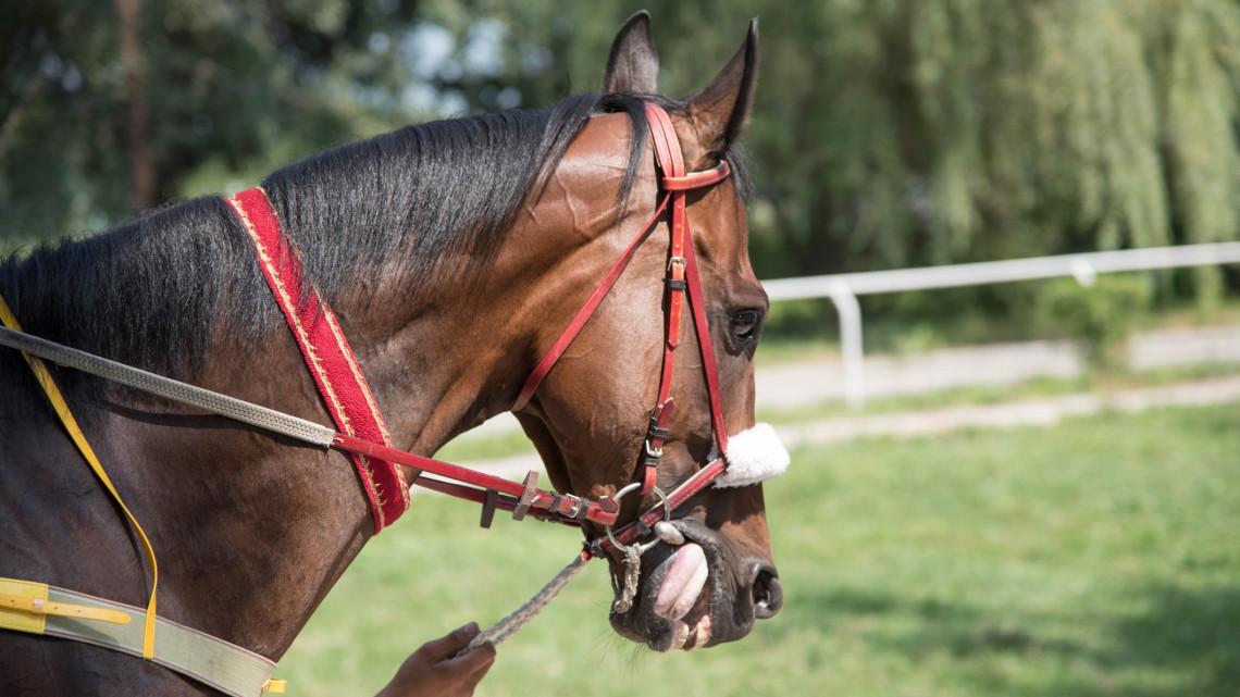 Elképesztő történet a derbiről: már 3 évesen a lovaglás szerelmese volt a tehetséges versenyző