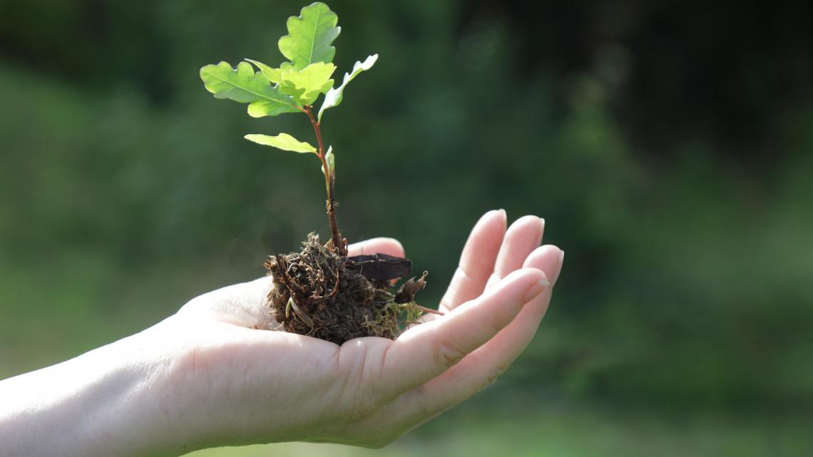 Ők az igazi magyar klímaharcosok: 200 ezer fát ültettek egyetlen év alatt