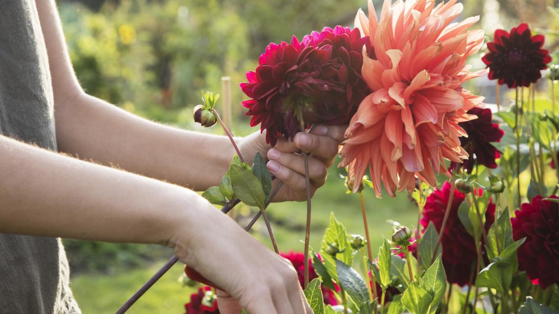 Bálint gazda emlékére alapítottak díjat: fotókon Magyarország legszebb kertjei és balkonjai