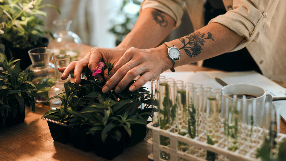 Ez a profi kertészek filléres trükkje: így termeszd talaj nélkül, gyorsabban a zöldségeidet