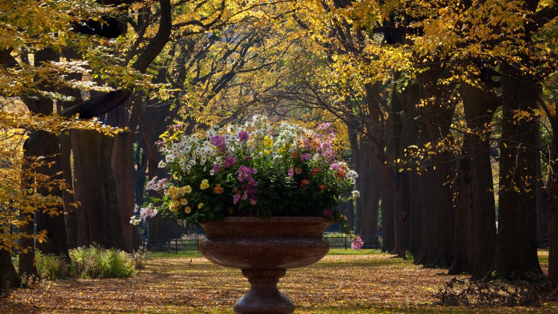 Íme az ősszel is pompázó kert titka: ezt az 5 virágot még mindig nem késő elültetni