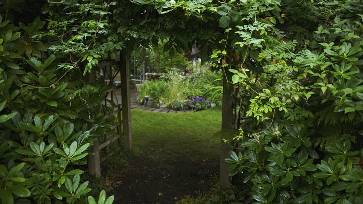 Turbózd fel az árnyékos kerted: íme néhány tanács, hogy lehet buja és virágzó udvarod