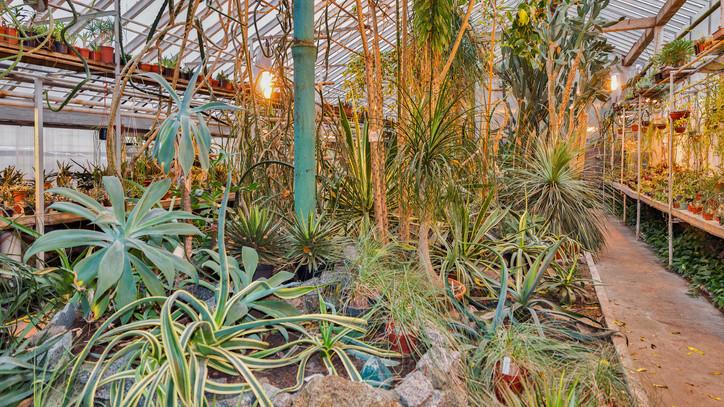 Főszerepben a pozsgások: karneváli kaktuszkiállítás a Debreceni Állat- és Növénykertben