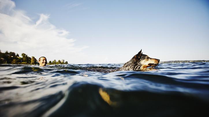 Ezt sok strandoló nem nézi jó szemmel: őket nem engednék a víz közelébe