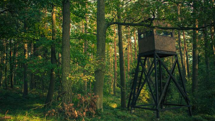 Országszerte leseket épít a magyar természetfotós: így mutatná meg testközelből a vad élővilágot
