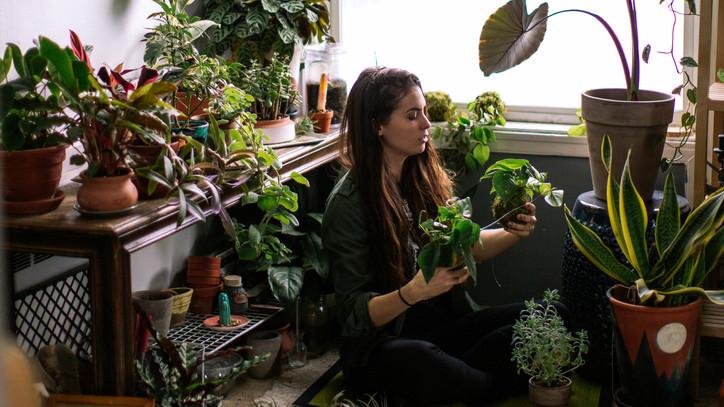 Íme a szobanövények ősellenségei: ha bejutnak a lakásba, szörnyű pusztítást végeznek