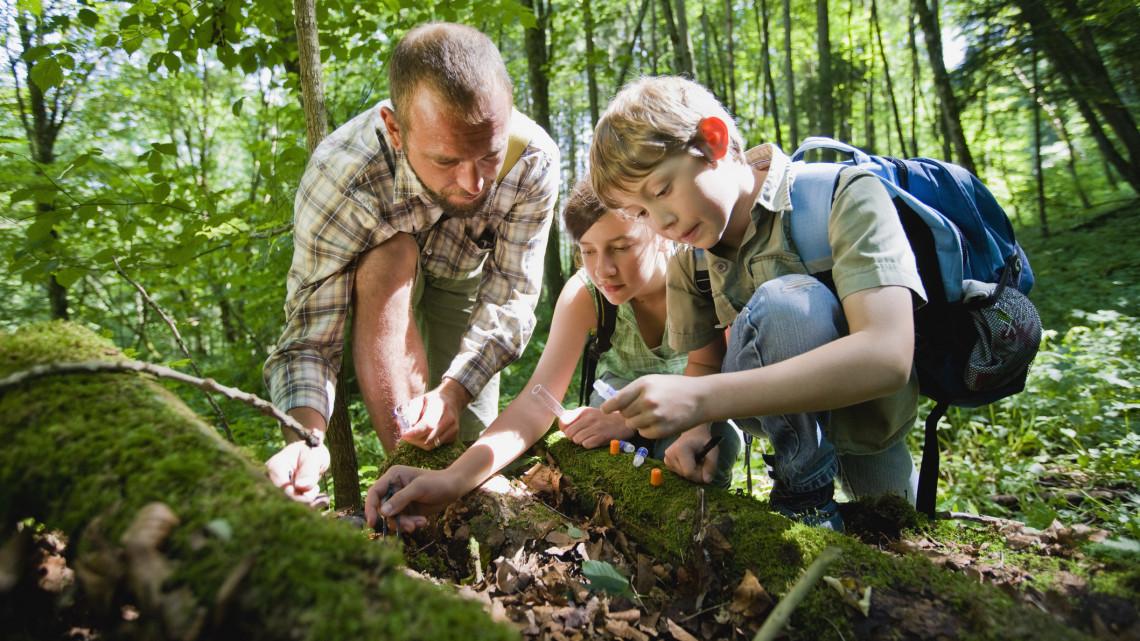 Súlyos veszély az erdőkben: csak ebben az időpontban induljunk kirándulni