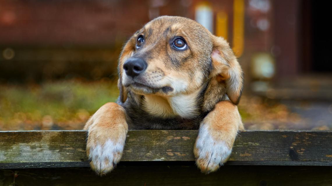 Érik a kutyakrízis: megtelnek a menhelyek, tömegével szabadulnak el kóbor ebek
