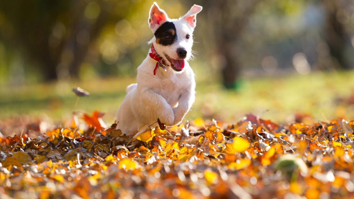 Ezt a legtöbb kutyatartó nem tudja: 6 veszély, amire figyelnünk kell az őszi sétáknál