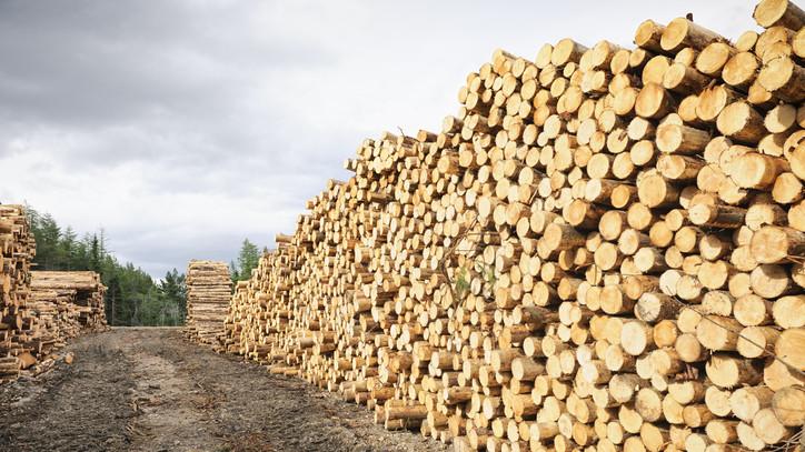 Zsebbenyúlós lesz az idei fűtési szezon: ennyiből jöhet ki a család tűzifa vásárlása
