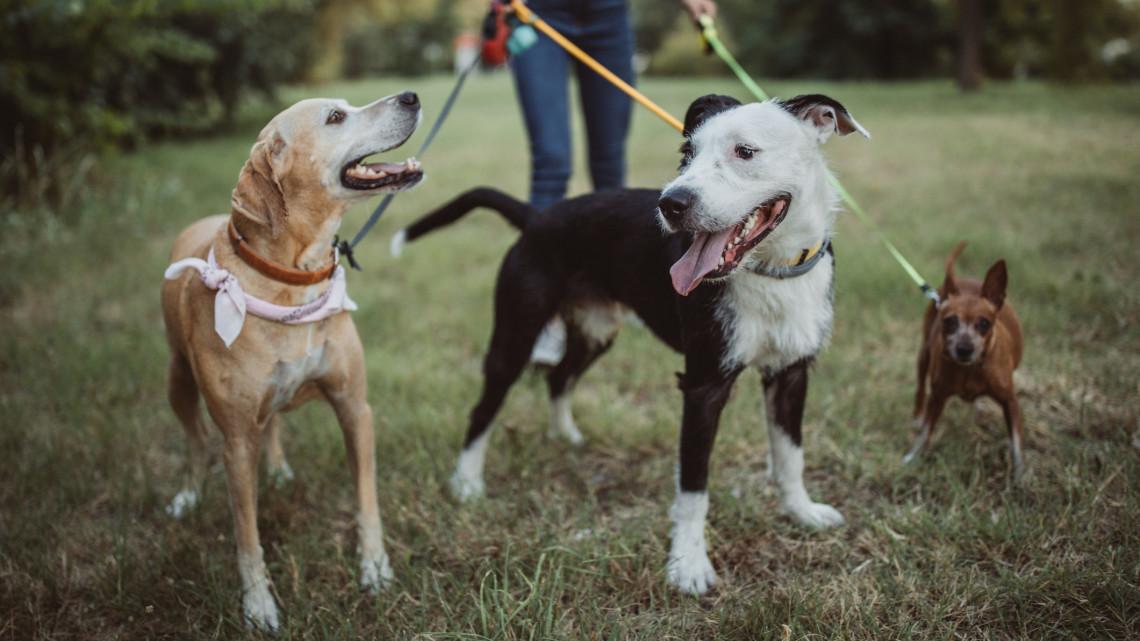 Rejtélyes megbetegedések a kutyafuttatókban: ezért tüsszög az eb?