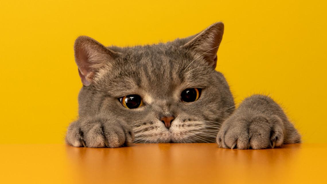 Macskariasztás egyszerűen: ultrahangos macskariasztó berendezés, macskariasztó spray