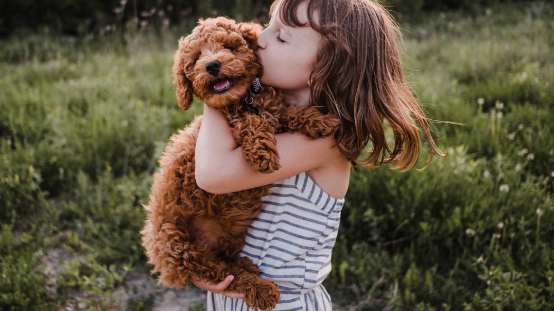 Ezt az időszakot rosszul viselik a kutyák: így kerülhetjük el a bajt