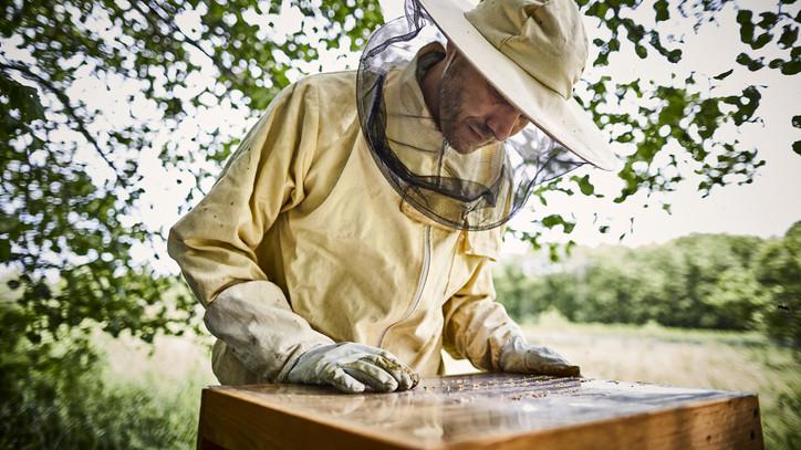 Univerzális méhészetet hozott létre Vizsolyban: ő az ország legfiatalabb méhész mestere