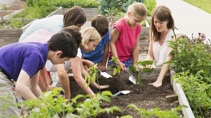 A kertészkedés rejtelmeivel ismerkedhetnek a gyerekek: iskolakertet adtak át Leányfalun