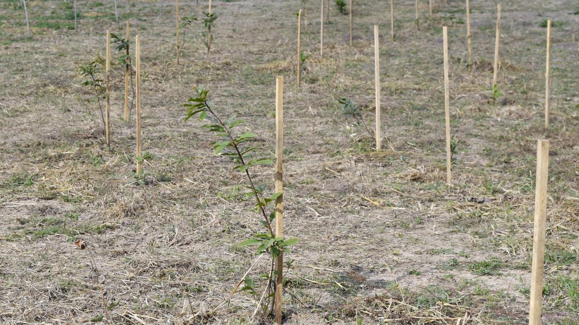 Most jár jól, aki erdőtelepítésben gondolkozik: támogatáshoz juthatnak a gazdák