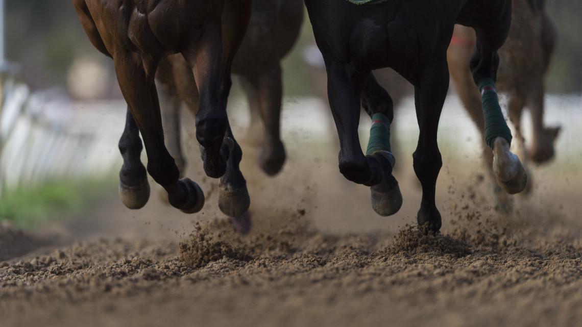 Megküzdöttek a helyi lovasok: ők nyertek a Nemzeti Vágta előfutamán