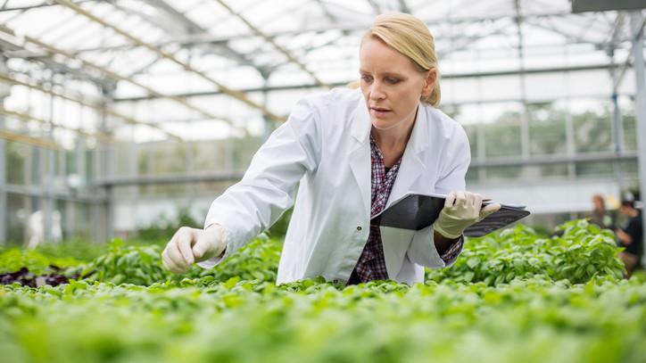 Milliárdos beruházás: növénytermesztési központ épült Somogycsicsón