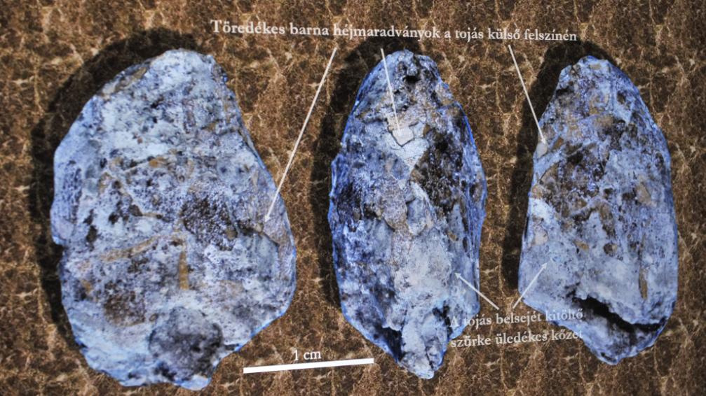 Hihetetlen felfedezés: dinoszaurusztojást találtak a magyar településnél
