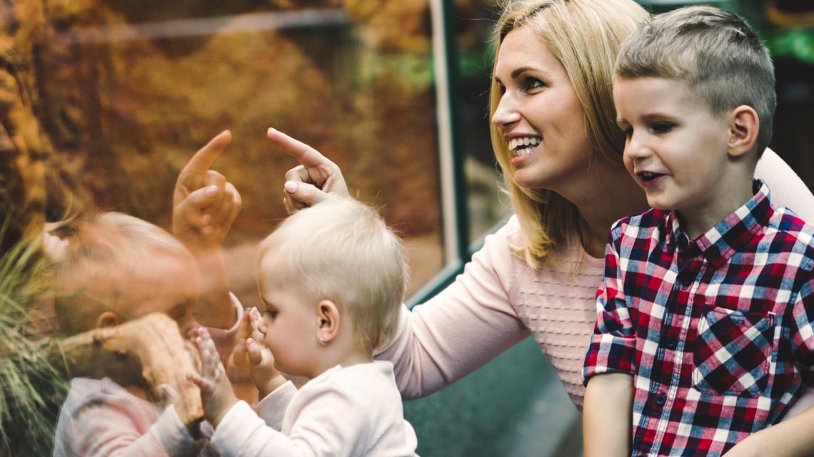 Ezt kár lenne kihagyni: egy héten át izgalmas meglepetésekkel vár a vidéki állatkert