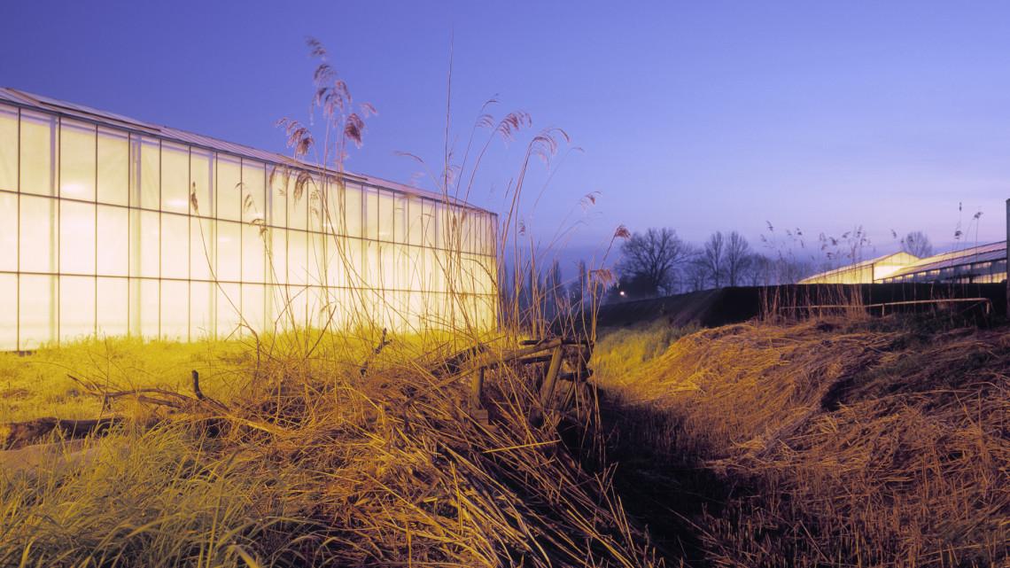 Ez hihetetlen: növények segítik a munkát a vidéki szennyvíztisztító telepen