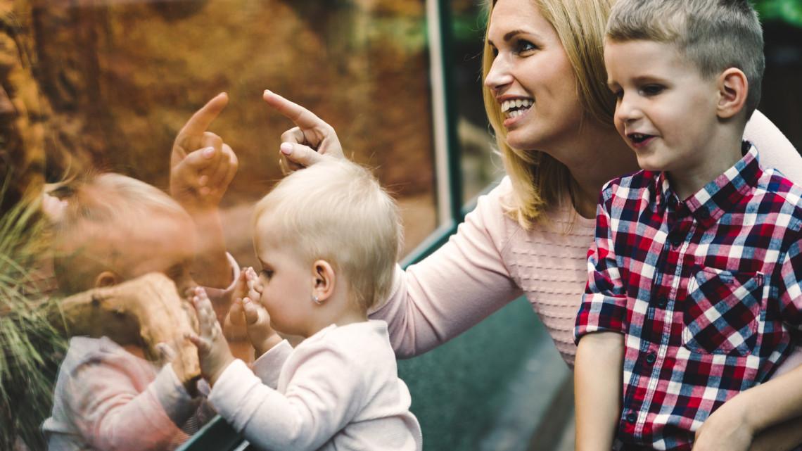 Egzotikus hangulat a vidéki állatkertben: ezzel a meglepetéssel várják a látogatókat