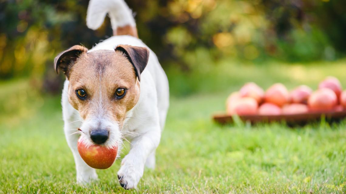 Vigyázat! Ezekkel az őszi finomságokkal meg is mérgezheted a kutyádat