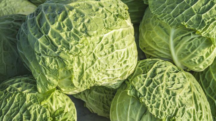 Bizakodnak a gazdák: akár még átlag feletti is lehet az idei káposzta termés mennyisége