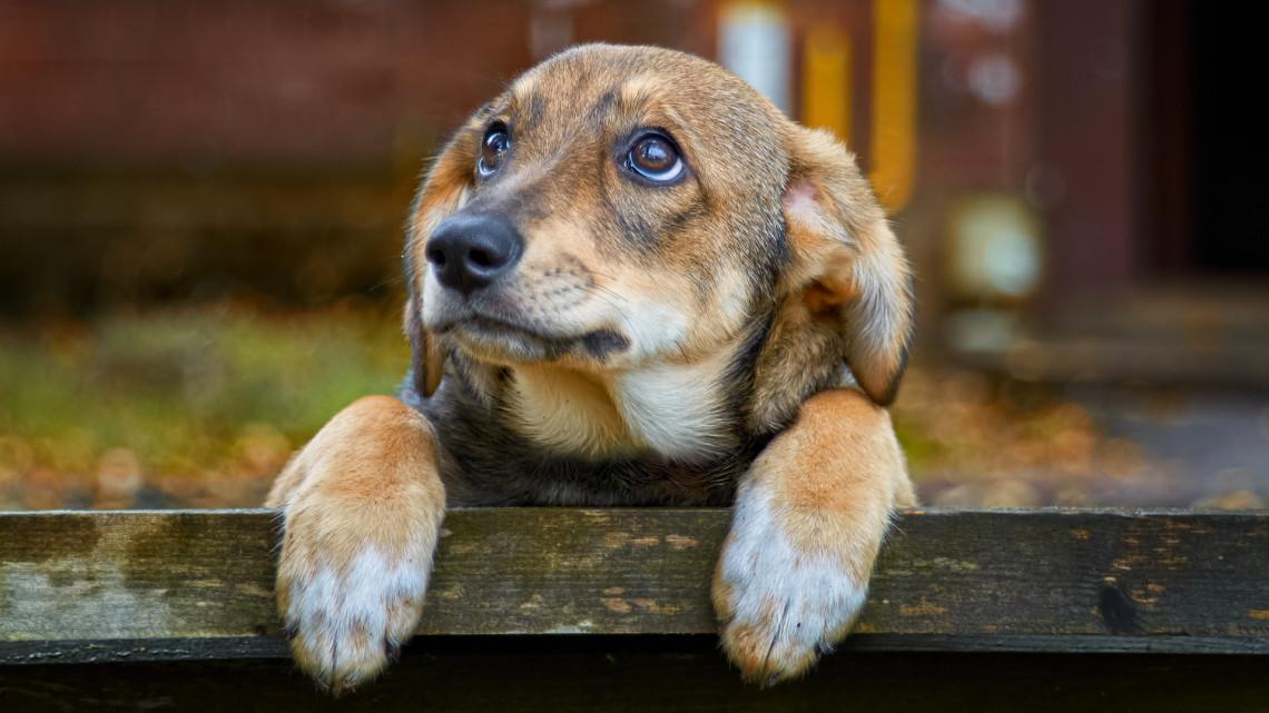 Érkezik a rettegett kutyabetegség: 4 immunerősítő tipp, amivel felkészülhetünk az őszre