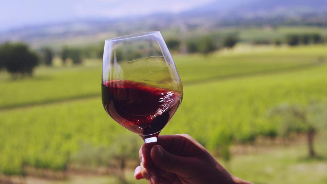 Íme Magyarország legszebb szőlőbirtokai: mutatjuk a verseny győzteseit