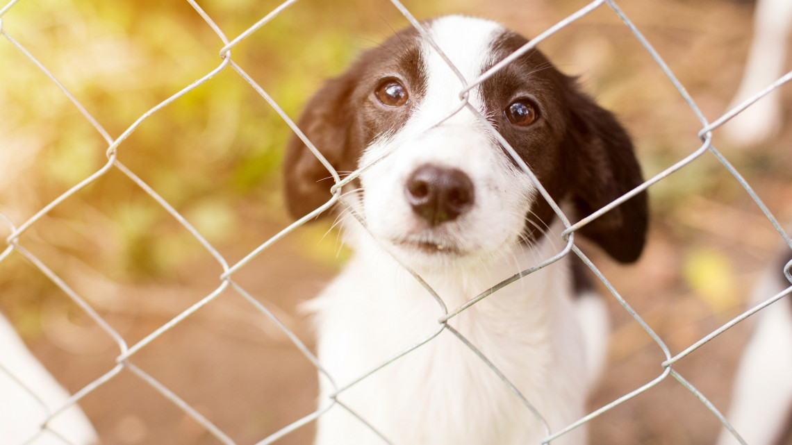 Hihetetlen: eddig ismeretlen veszély fenyegeti a háziállatokat