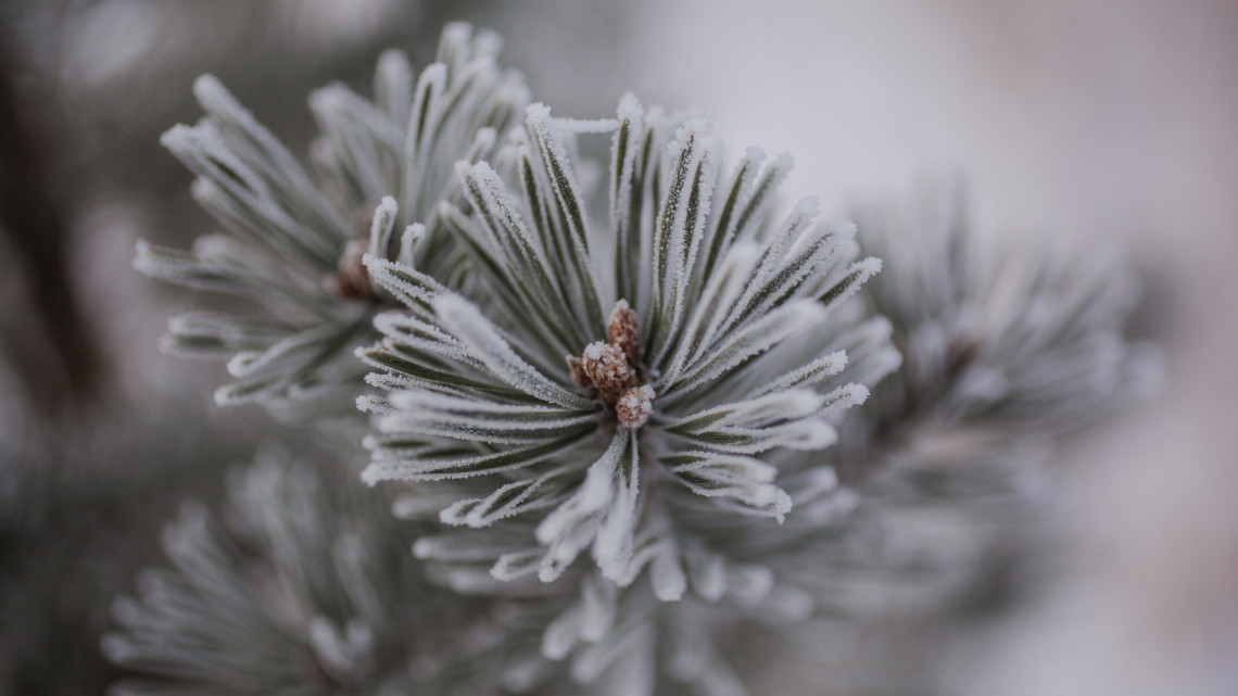 Megérkezett az első hó Magyarországra: több centi esett, videókon a fehérbe borult táj