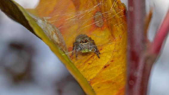 Hihetetlen felfedezés: ez az apró állat segíthet az almakártevők gyérítésében?
